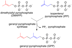 Lipid-anchored protein - Prenylation chains (e.g. geranyl pyrophosphate)