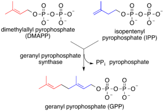 Lipid-anchored protein - Prenylation chains (e.g. geranyl pyrophosphate)
