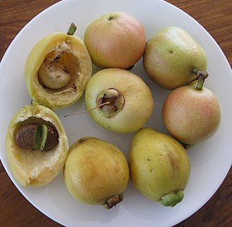 Syzygium jambos - Fruit and seeds. One fruit is split to show seeds.