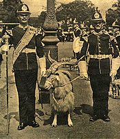 sepia-tone, a goat with a head-dress between two soldiers