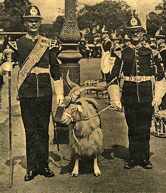 William Windsor (goat) - Another regimental goat: Taffy IV, of the 2nd Battalion of the Welsh Regiment, was on active duty in France during World War I, participating in the Retreat from Mons, the First Battle of Ypres and other famous battles. He was awarded the 1914 Star.