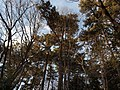 Tamagawa-dai park - panoramio - Kaz Ish (1).jpg