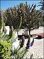 Tavira (Portugal) (33257247461).jpg