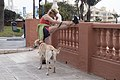 Teaching an old dog new tricks (13308038355).jpg