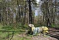 Terebowla Black pine.JPG