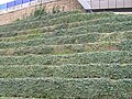 Terracing, The Sage - geograph.org.uk - 1199752.jpg