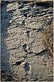 Test-pit L8 at Laetoli Site S.jpg