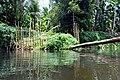 Thanikkudam River01(DSC 2008) 01.JPG