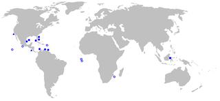 <i>Thaumatichthys</i> Genus of fishes