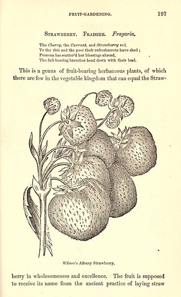 File:The American gardener's assistant (Page 197) BHL17583425.jpg