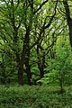 The Forest of Dean - geograph.org.uk - 1303221.jpg
