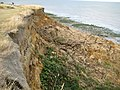 The Naze, Cliff erosion (4) - geograph.org.uk - 1479381.jpg