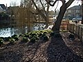 The Pond Ruislip - geograph.org.uk - 687481.jpg