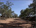 The dry, sandy bed of Yancowinna Ck. Barrier Highway, Broken Hill, 28-9-13. Peter Neaum. - panoramio.jpg