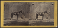 """The residence of Morris Ketchum, Westport, Conn. (Showing a man standing outside a barn with a horse """"Sir Tom.""""), by E. & H.T. Anthony (Firm).png"""
