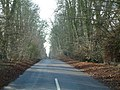 The road to Great Bedwyn - geograph.org.uk - 99651.jpg