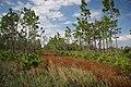 Three Lakes Wildlife Management Area (48914728823).jpg