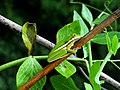 Tiny Tree Frog (Unsplash).jpg