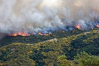Titahi Bay - Titahi Bay scrub fire