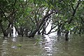 Tonle Sap Lake (9728451743).jpg