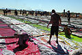 Tough Mudder 130223-F-HT977-372.jpg