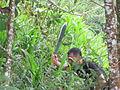 Trabajos con machete, limpiando terreno en zona montañosa de Buga.JPG