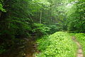 Trail-Creek-Trees - West Virginia - ForestWander.jpg