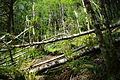 Trail down to Tualatin River along logging road to Ki-a-Kuts Falls - Oregon.JPG