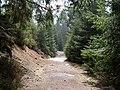 Trail near Sonnenkappe 04.jpg