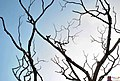 Tree branches silhoutte.jpg