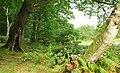 Trees and lake, Clandeboye Wood - geograph.org.uk - 967854.jpg