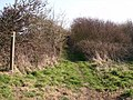 Trees and shrubs - geograph.org.uk - 378776.jpg