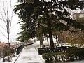 Trieste, Italy - panoramio - silvio alaimo sj (1).jpg
