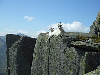 Tryfan - Tryfan and neighbouring parts of the Glyderau are home to feral goats .