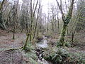 Tryon Creek State Natural Area, OR 2012.JPG