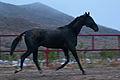 Turkmen Studfarm - Flickr - Kerri-Jo (61).jpg