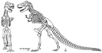 Jurassic Park - 1917 skeletal diagram of Tyrannosaurus published by Henry Fairfield Osborn, which was the basis of the covers of Jurassic Park and The Lost World, and subsequently the logo of the movies.