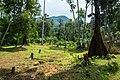 USAID Measuring Impact Conservation Enterprise Retrospective (Philippines; Nagkakaisang Tribu ng Palawan) (39581658894).jpg
