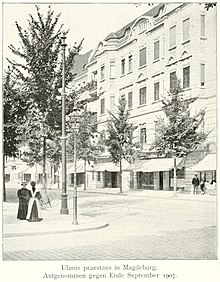 Ulmus × hollandica 'Superba', Magdeburg September 1907.jpg