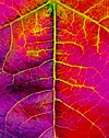 Up close with a California autumn leaf.jpg