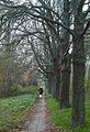 Urbanowska, Poznan, tree.JPG