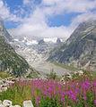 Val Ferret DSCN8808 dett.jpg