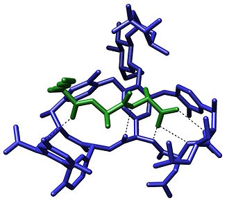 Molecular recognition - Crystal structure of a short peptide L-Lys-D-Ala-D-Ala (bacterial cell wall precursor) bound to the antibiotic vancomycin through hydrogen bonds