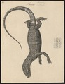 Varanus bengalensis - 1700-1880 - Print - Iconographia Zoologica - Special Collections University of Amsterdam - UBA01 IZ12400045.tif