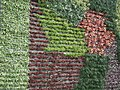 Vertical Garden from Lalbagh flower show Aug 2013 8784.JPG