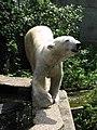 Vicious killer, or cute fuzzy animal? (540168809).jpg