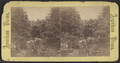View in Central Park, from Robert N. Dennis collection of stereoscopic views 5.png
