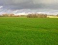 View to Downash Farm - geograph.org.uk - 344440.jpg