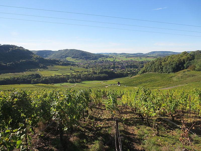 Vignoble du Jura 003.JPG