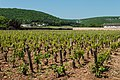 Vineyards near Gevrey-Chambertin (7309856342).jpg
